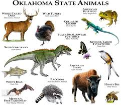 Oklahoma wild animals images 335 best animals of the world charts images wild jpg