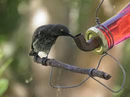 excellent sun bird feeder 84 diy sunflower seed bird feeder