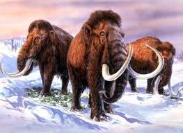 121 mammoths images ice age mammals