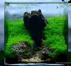 nano aquascape nano cube aquascape nano tank inspiration pinterest