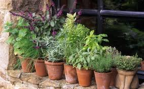 Window Sill Herb Garden by From Coriander To Mint A Guide To Growing Herbs The Telegraph