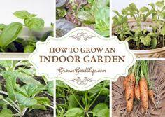 Easy Herbs To Grow Inside I U0027ve Experimented With Ways To Grow Herbs Indoors During The