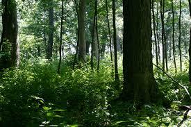 Illinois timber jpg