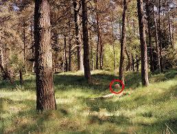 Color Blind Camouflage Test Can You Spot The Sniper Photographer U0027s Amazing Images Of Elite