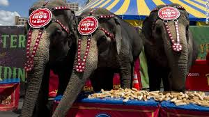 Blind Men And The Elephant Story For Children Famed Ringling Brothers Circus Closing Cnn