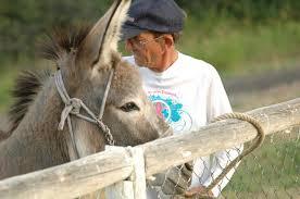 rancher logging slater rancher tom williams pursues burro racing steamboattoday com