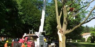 tree service companies archives the maritech home company