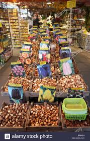 tulip bulbs for sale in the flower market amsterdam