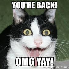 Yay Meme - you re back omg yay excited cat meme generator