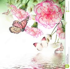 roses and butterfly floral background stock photo image of