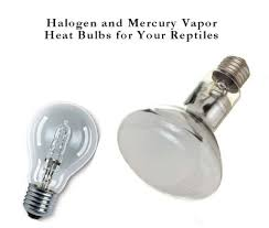 halogen light bulbs vs incandescent halogen and mercury vapor reptile heat bulbs box turtle world