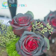 Colored Roses Aliexpress Com Buy Rose Seed 17 Varieties Rare Colored Roses You
