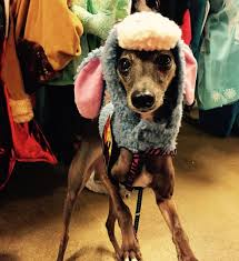 Eeyore Halloween Costume 23 Awesome Dog Halloween Costume Ideas Pictures Dogtime