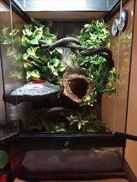 exo terra gecko tank crested gecko aquariums vivariums