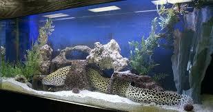 aquarium decoration ideas freshwater freshwater aquarium design ideas best home design ideas sondos me