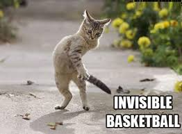 Invisible Cat Memes - invisible cat meme related keywords suggestions invisible cat