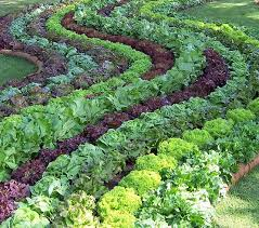 Kitchen Garden Designs 923 Best Herb Gardens Images On Pinterest Gardening Plants And