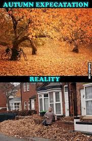 Autumn Memes - autumn expectation vs reality funny lol meme humor lol