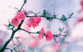 spring flowers wallpaper desktop background 100 full hdq spring