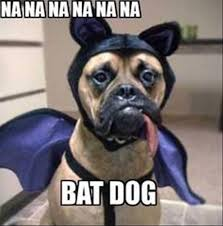 Grumpy Dog Meme - 27 most funny bat meme pictures of all the time