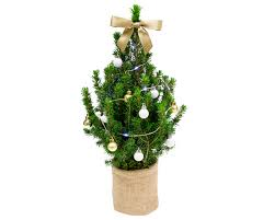 Half Price Christmas Decorations Tesco by The Cheapest Christmas Trees Available For You To Buy This Festive