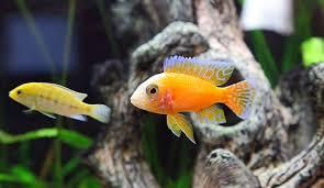 pesci alimentazione e accessori per pesci e rettili