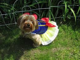 White Dog Halloween Costume Pet Halloween Costumes Trick Treat Westlake Pet Love
