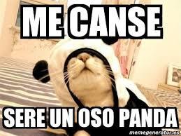 unique memes de pandas memes de osos imagenes chistosas kayak