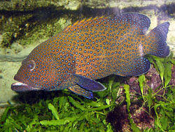 aquarium fish in kochi kerala manufacturers suppliers