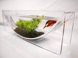 if it u0027s hip it u0027s here archives the betta bowl and aqua u