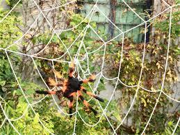 shop 50cm random color spider plush scary animals toy soft