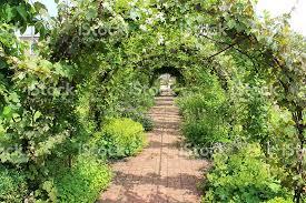 Grape Vine Pergola by Metal Pergola Garden Archway Tunnel Espalier Apple Trees Grape
