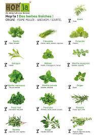 herbe cuisine jardin d herbes aromatiques vtpie