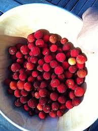 Decorative Ways To Cut Strawberries Arbutus Unedo Wikipedia