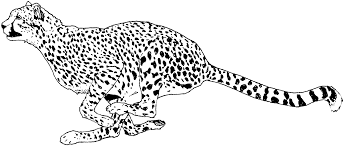 good cheetah coloring pages 61 coloring pages kids