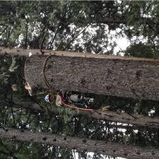 a 1 tree service stump removal llc in redding california