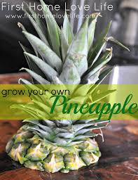 Easy Apartment Plants How To Grow Your Own Pineapple Gardens Plants And Garden Ideas