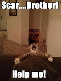 Lion King Memes - lolcats the lion king lol at funny cat memes funny cat