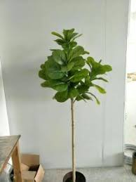 china best selling artificial plants of ficus lyrata tree gu hs98l