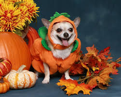 Halloween Animal Crossing by 20 Dressed Up Animals Who Are Winning Halloween Love Nature