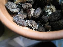 Orchid Bark What To Do If Your Orchid Has Mold Ask The