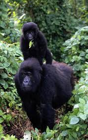 congo rainforest and basin places wwf