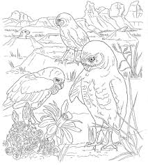 free desert animals coloring pages murderthestout