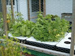 Hydroponics Vegetable Gardening by Smart Hydroponic Kitchen Garden System In Simple Methods