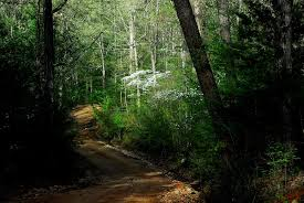 Arkansas Forest images Finding health in the forest arkansas wild