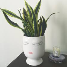 Face Planter 23 Instagrams That Prove Snake Plants Are The New Fiddle Leaf Fig