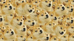 Meme Wallpaper - doge meme wallpaper modafinilsale