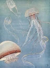 Anthropologie Jellyfish Rug Antique Jellyfish Archival Print Jellyfish