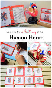 Visual Anatomy And Physiology Pdf 94 Best Preschool Human Anatomy U0026 Physiology Images On Pinterest