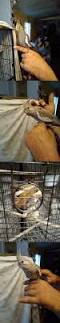 Avian Sun Floor Lamp by 543 Best Other Bird Supplies 3211 Images On Pinterest